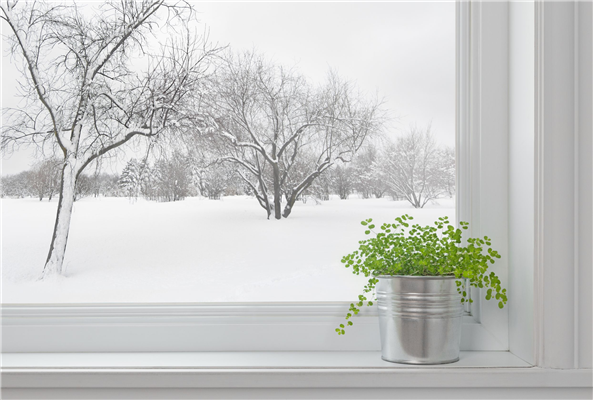 Energy Efficiency Tips: The Benefits of New Siding and Windows